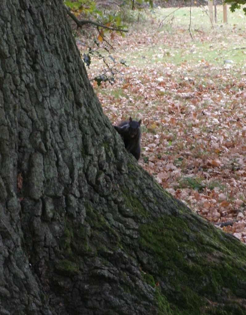 Scary squirrel in the park!