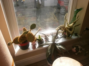 Cacti in their new home