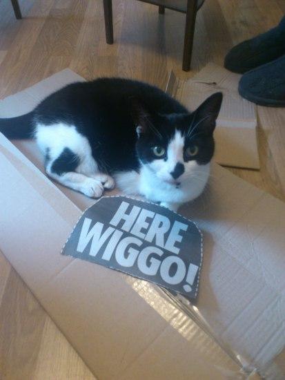 "Betty says, ""Here Wiggo!"""